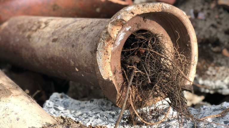 How to protect your plumbing from tree roots
